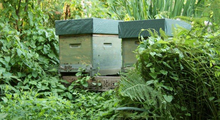 10 er Dadant Bienenbeute im Dschungel Stil. Sie steht umgeben von diversen Pflanzen.