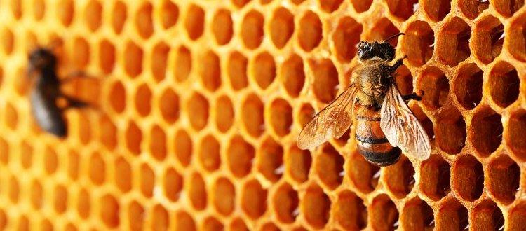 Eine Nahaufnahme von Bienenwaben. Was ist Propolis ?