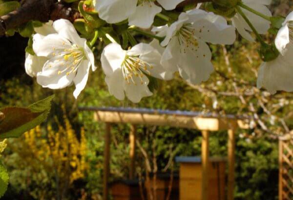 Schöne Blüten im Garten
