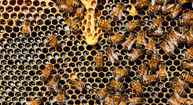 Einige Bienen auf Waben gefüllt mit Honig.