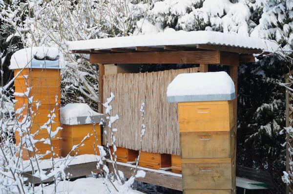 Bienenbeuten im Winter. Welche Bienenbeute kaufen.